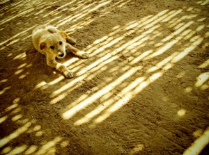 Playful Stray Puppy in North African Desert