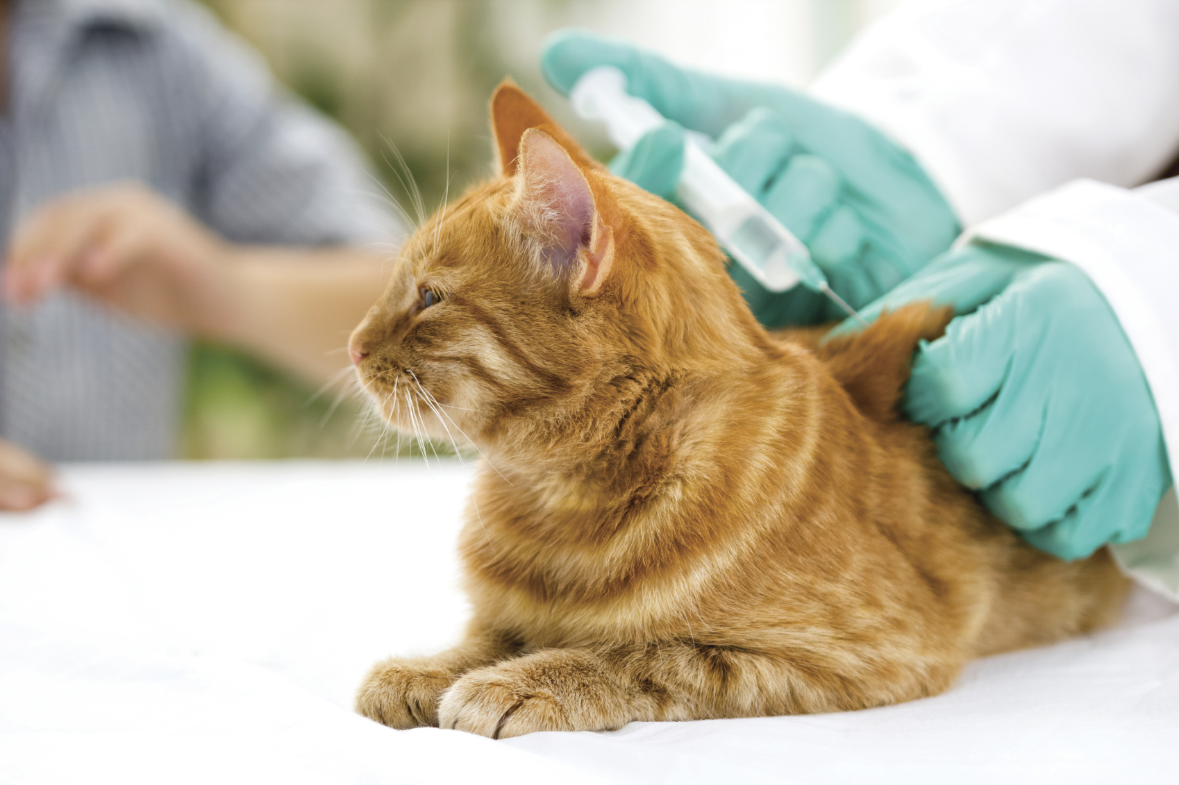 Image result for The Importance of Vaccinating Your Cat