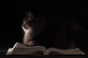 Cat sleeping on an open book