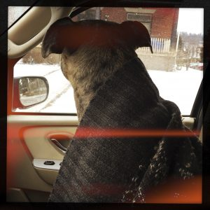 Dog in Car with Sweater during Snowstorm
