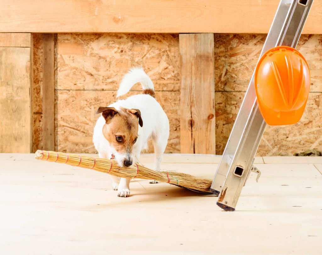 pets safe during remodel