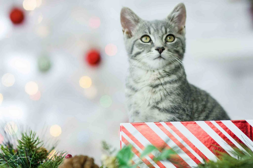 pets and the holidays