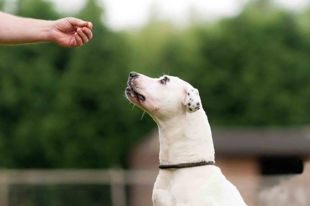 dog earns treat