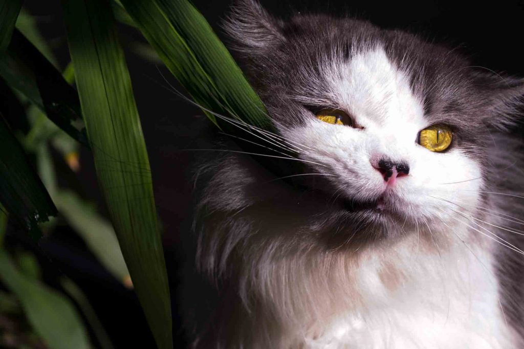 Prevent a Pet Poisoning This Spring