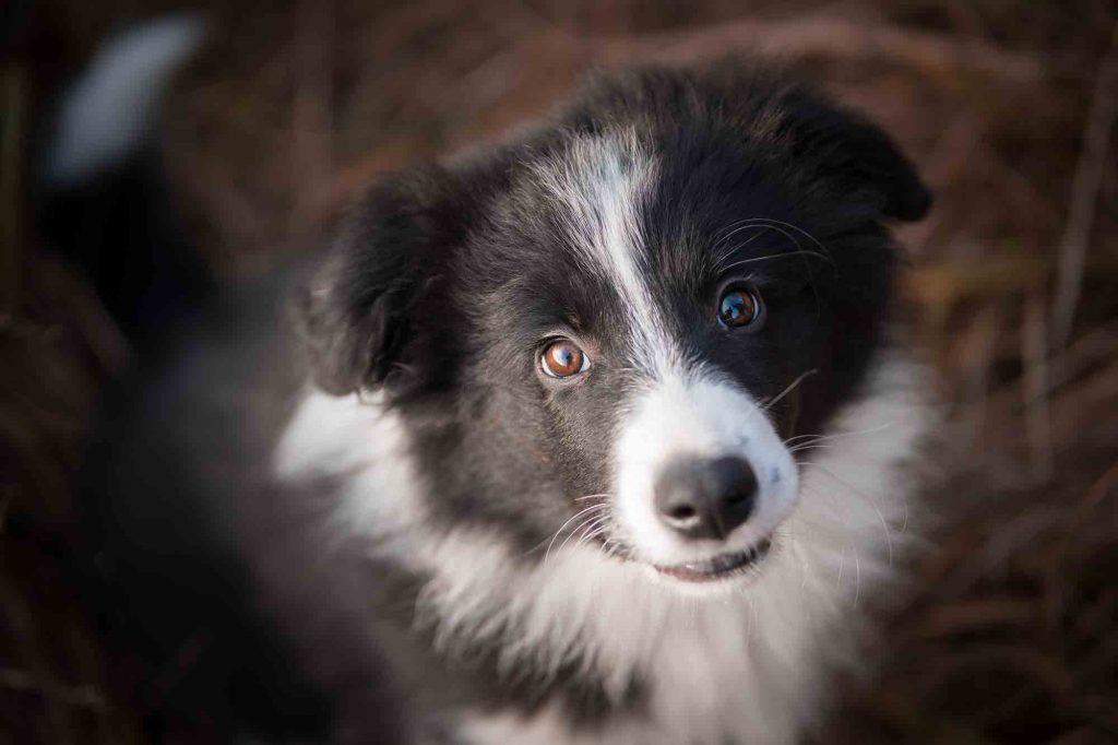 adopted pet