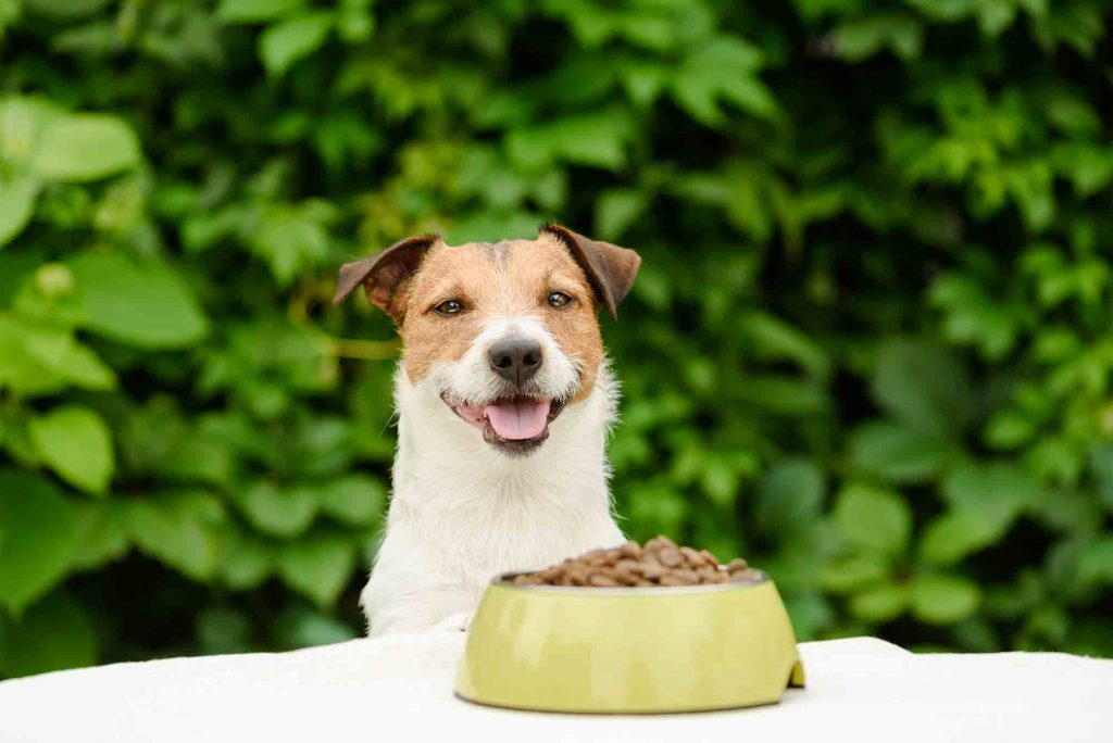 Does your dog need a diet?