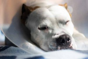 Caring for your pet after surgery is part of healing your pet
