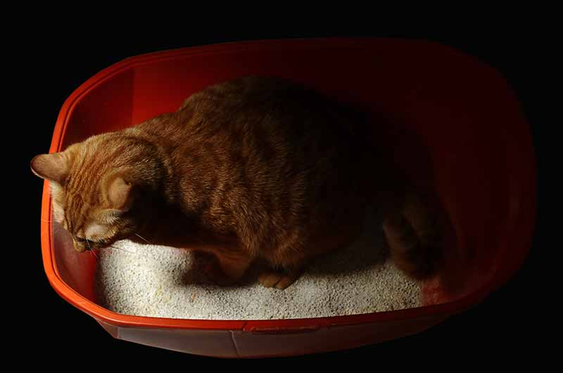 Automatic litter boxes can help with keeping your house from smelling like cats