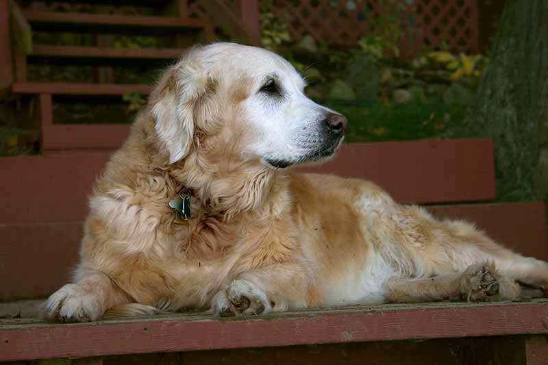 Senior pet health is important to senior pet care