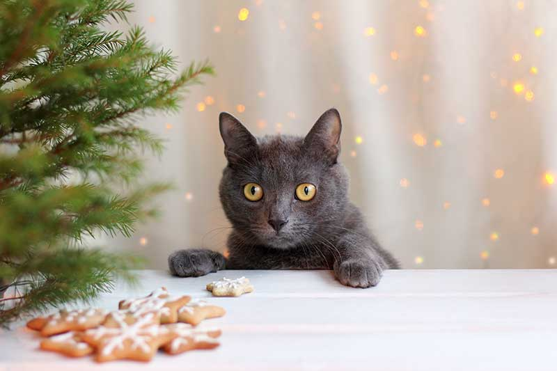 DIY pet gifts make pet-safe holiday gifts