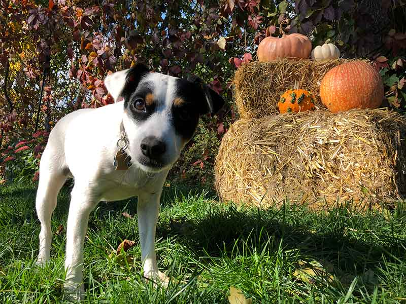 Thanksgiving fun for pets isn't all about food and pet safety.