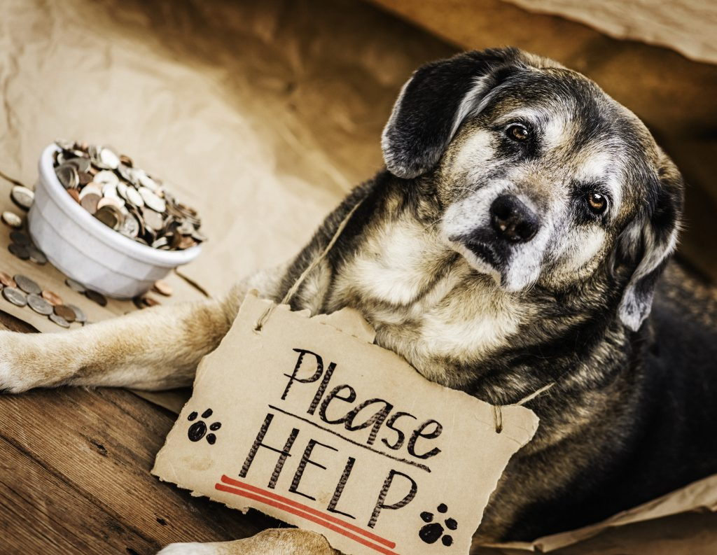 Helping homeless pets is part of keeping pets safe.