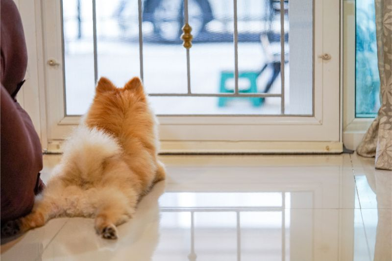 A dog is splayed out in the entry way of its home, looking out the glass door