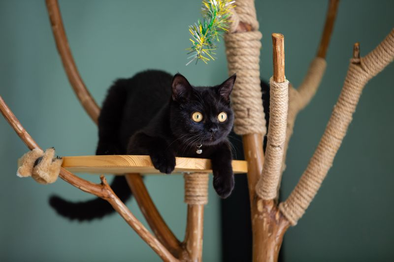 "A black cat with yellow eyes stares from its perch in a cat tree. ""Tree dweller"" cats like to have a high vantage point."