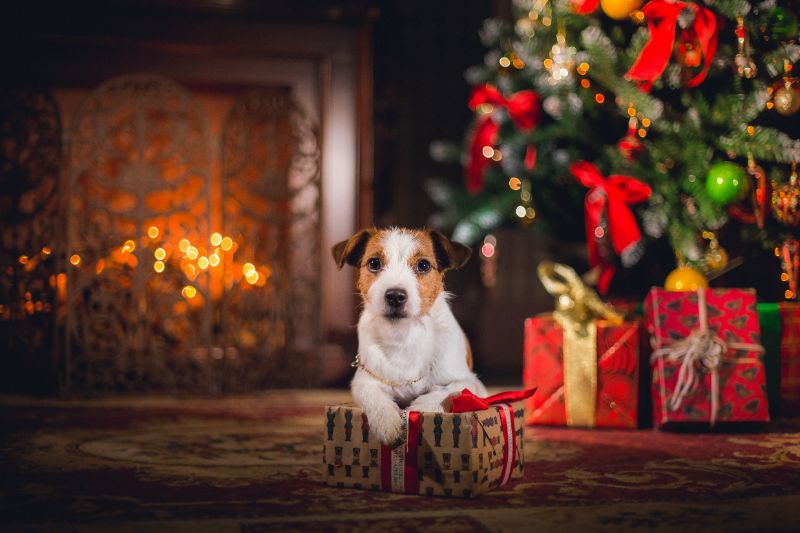 A puppy sits among some Christmas gifts and tree next to a fireplace. Adopting a pet for Christmas is a big step, so be sure to consider all that's involved before making that choice.