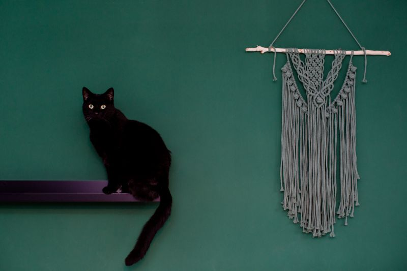 A black cat sits precariously upon a potentially dangerous decoration against a green wall.