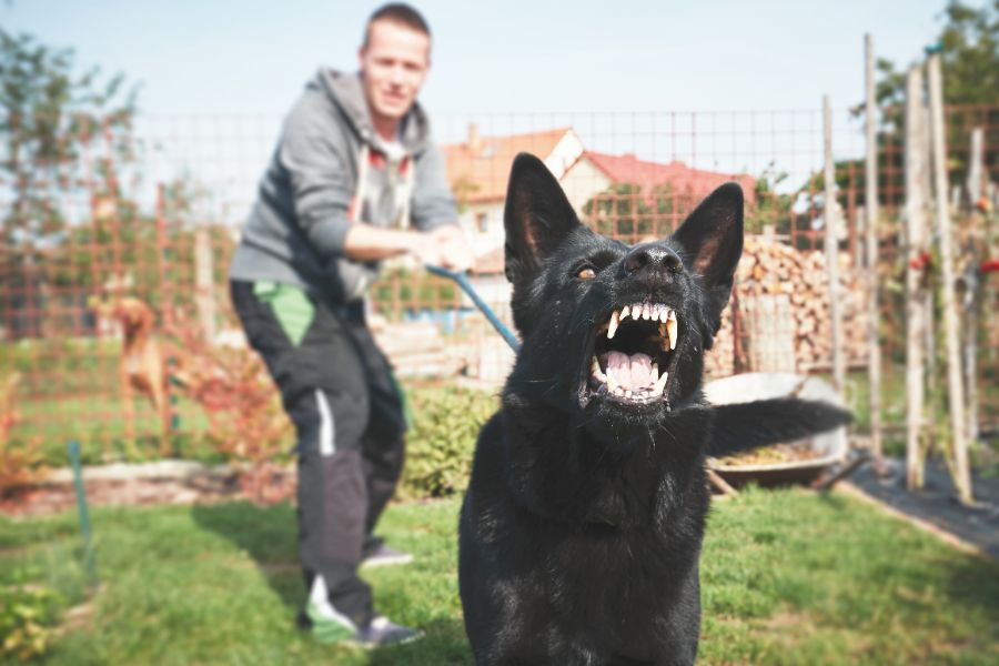 A man holds the least of a snarling dog.
