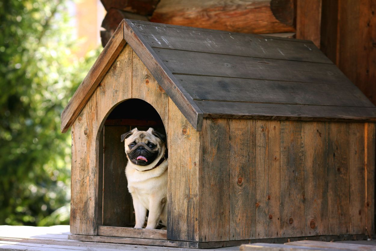 A pug waits in the door of a well-designed dog house.